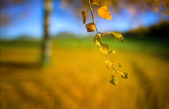 will soon fly away... (Aleksandr Matveev) Tags: autumn dof bokeh contax cz 1000 gmt 3514 distagon kartpostal abigfave platinumphoto colorphotoaward overtheexcellence treesdiestandingup updatecollection ucreleased czcontaxdistagon3514 blinkagain sonyphotochallenge