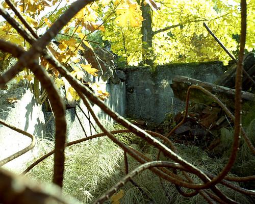 Metal vines