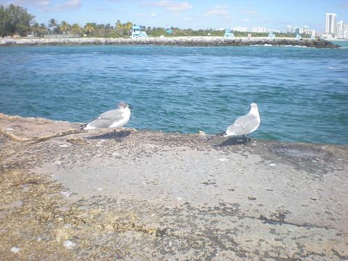 3010772208 2cfebd6a86 Playa Haulover, una de las mejores playas de Estados Unidos
