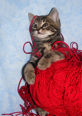 Yaaaarn! (Julia-D) Tags: cute cat kitten yarn