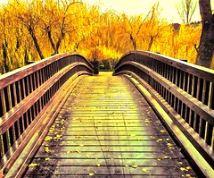un puente hacia el futuro (jesuscm) Tags: wood bridge autumn espaa naturaleza tree nature rio river puente arbol spain madera riviere  chapeau fields pont otoo t