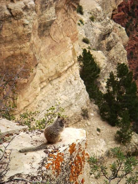 懸崖上的松鼠.JPG
