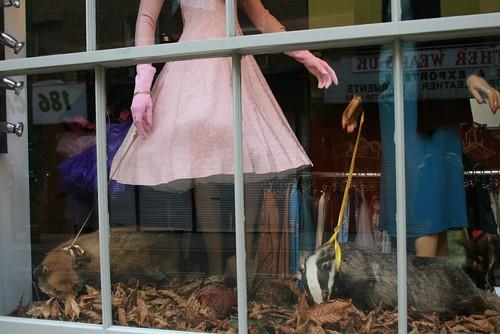 Animais empalhados na vitrine