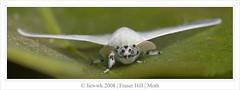 12.6 Moth - ID Need ... 1:1