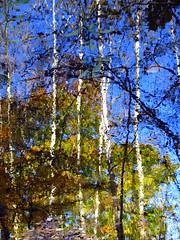 impressionist fall reflection