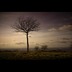 hilltop loner II (FoxyMcSlick) Tags: autumn england sky cold tree nature grass silhouette clouds digital canon landscape manchester eos rebel daylight kiss cityscape view purple cheshire natural northwest outdoor bare branches horizon explorer hill windy explore hyde views stockport cumulus vista daytime hillside 3000 hilltop notripod xsi noleaves autimn explored zarafa abigfave visiongroup geecross theunforgettablepictures thefinalcrown amiamoci absolutelystunningscapes goldenheartaward 100commentgroup foxymcslick lesamisdupetitprince artofimages sensationalphoto flickrclassique superstarthebest goldendiamondblog sailsevenseas