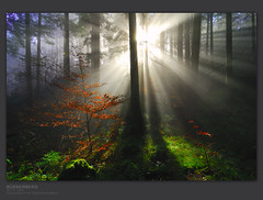 opposites attract (gregor H) Tags: autumn trees misty backlight forest austria bravo ligth gettyimages raysoflight vorarlberg oppositesattract infinestyle megashot brserberg alemdagqualityonlyclub alemdaggoldenaward