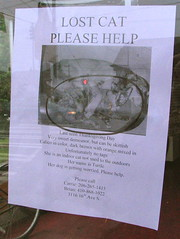 Turtle the cat is missing. Please click the image to see the flyer.