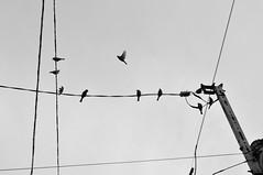 bird animal voigtlander 58mm nokton omotesando d300 capturenx