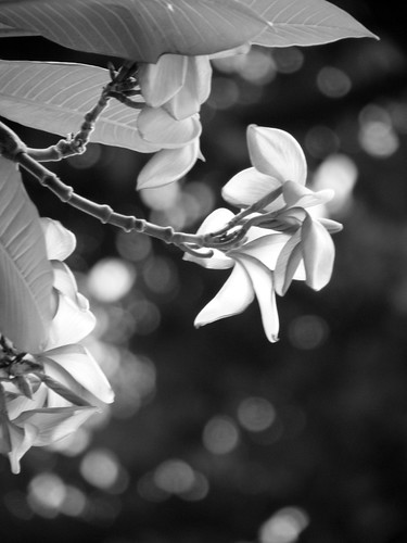 2009 Photo Challenge - Day 48: B&W Flower