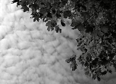B&W_fall_sky (Le Clan Brunet) Tags: sky white black tree leaves clouds noir creative commons textures ciel sharing nuages arbre blanc share licence feuilles nikond60 texturesforlayers johannebrunet