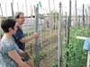 Maggio, distribuzione compost 15
