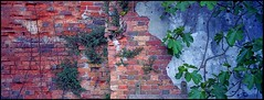 Fig & Brick - The Lost Gardens Of Heligan, Cornwall (john lunt) Tags: uk panorama colour film horizontal gardens 35mm john landscape lost photography photo cornwall image kodak britain pano great picture rangefinder panoramic photographic hasselblad analogue 31 xpan contrasts heligan lunt mevagissy xpan2 of ektar100 flickrawardgallery
