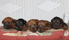 Van, Kyra, Reba, Jake and Cheynne 3 weeks old