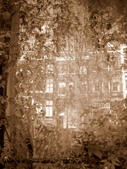 window (andrevanb) Tags: flowers reflection window amsterdam statue spring curtain leliegracht guirlandes