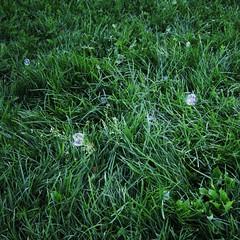 green (gagilas) Tags: green grass delete10 delete9 square delete5 delete2 jake cunt delete6 delete7 save3 delete8 delete3 save7 save8 delete delete4 save save2 save9 save4 save5 save6 bubles gagilas