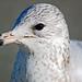 George Gull Photo 8
