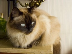 Benito Reloaded (jazzzz   ) Tags: cat lindo gato mueco benito kissablekat bestofkats