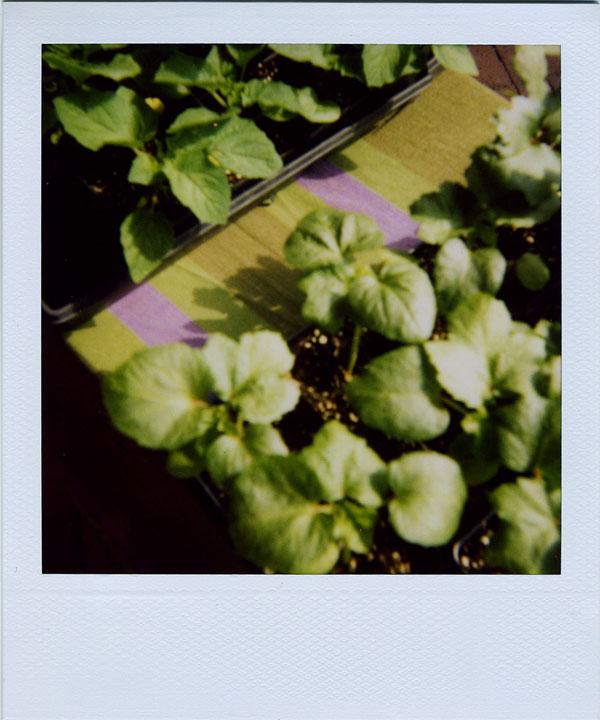 may30: plants