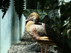 Depressed Duck (On the East Coast) Tags: bird leaves zoo dczoo