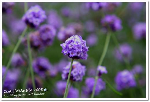 Hokkaido_0488