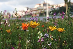 Flowers in Coimbra