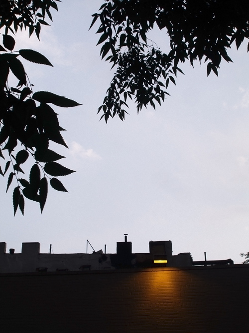 light on building, leaves in silhouette, Manhattan, NYC