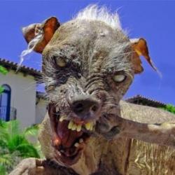 ugly_dog