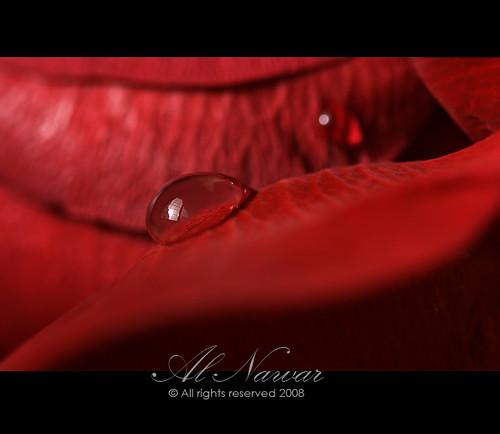صور تدل على الحب والرومانسيه