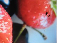 erdbeeren mit fliege