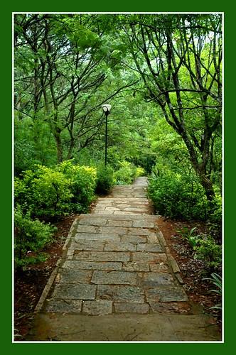 Down the garden path