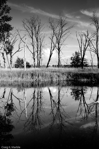 Carlos Avery Landscape