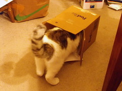 Box from LA 1