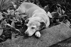 sarah-bw-patio-naps-1-w