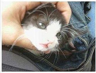 連貓咪都有美少年…真是不公平呀!!