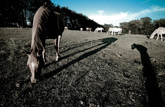 Horse Photographer (Shawn Christian Huber) Tags: city ohio amazing ethan snap rubber shawn reject akron huber rimke