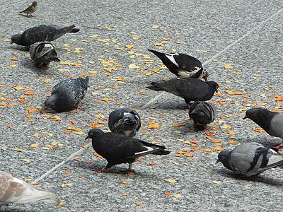 pigeons et tortillas.jpg