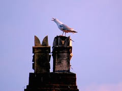 Scream (nEoPOL) Tags: blue roof sea chimney bird nature wales nikon gull stack pot cubism neopol d40 platinumphoto