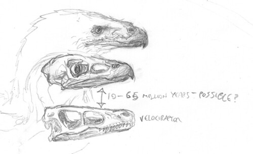 Eagle-raptor--thing-skull