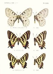 papill 2