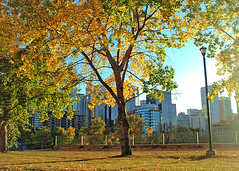 Autumn Downtown (LostMyHeadache: Absolutely Free *) Tags: park autumn trees light sky sun canada tree calgary tower fall lamp grass leaves skyscraper buildings landscape outside outdoors office leaf downtown branch skyscrapers branches canadian alberta 2008 offices davidsmith johnzorn colorphotoaward colourartaward lostmyheadache
