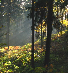 Morning in the autumn forest (svetlana1961(very busy)) Tags: nature mb soe momentos naturesfinest blueribbonwinner kartpostal golddragon abigfave worldbest platinumphoto anawesomeshot irresistiblebeauty diamondclassphotographer theunforgettablepictures thatsclassy adoublefave overtheexcellence theperfectphotographer goldstaraward landscapesdreams natureselegantshots multimegashot absolutelystunningscapes qualitypixels inspiredbyhim damniwishidtakenthat specialpictures goldenheartaward vosplusbellesphotos naturescreations passionateinspirations dragondaggerphoto goldenmasterpiece interetingphotos inspiredbyyourbeauty