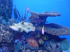 Ripley's Aquarium of the Smokies (Joe Architect) Tags: travel aquarium tennessee ripleys gatlinburg pigeonforge 2008 sevierville ripleysaquariumofthesmokies