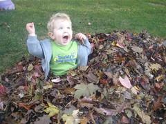 2008.10.19-Leaves.04.jpg