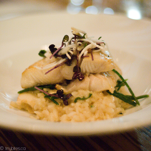 Sablefish #1