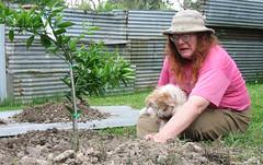 2008-11-03 Mandarin Bush Planting - Laura upset
