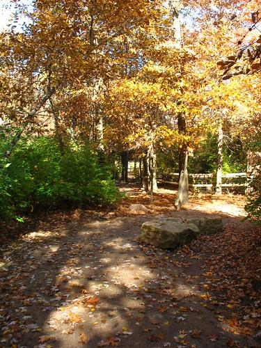 leafy paths.