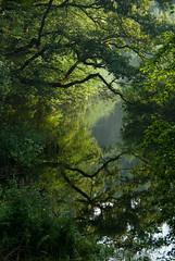 Slovenian dream (beeldmark) Tags: reflection nature water forest river landscape geotagged morninglight europa europe groen pentax natuur slovenia karst bos ochtend landschap slovenie reflectie rivier dromerig spiegeling ochtendlicht slovenië rakovskocjan riviertje ddd3 k10d tamronaf18250mmf3563diiildasphericalifmacro tamron18250 beeldmark dolledokadonderdag geo:lat=45791946 geo:lon=14293953 karstriviertje bomenreflectieinochtendlicht karstrivier
