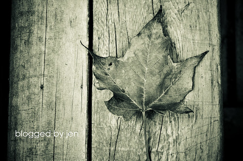 leaf -- BW