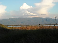 Stagno S' Ena Arrubia - Arborea (Robipoli) Tags: senaarrubia montearcistagnofenicoterinaturasardegnaarboreacampingsennaarrubiaoristano